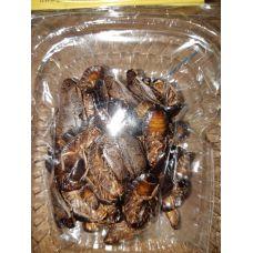 Корм для рептилий Мраморный таракан сушенный 10г