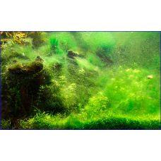 Сайдекс от водорослей 500г