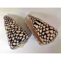 Раковина для аквариума Мраморный конус