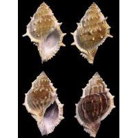 Раковина для аквариума Лягушачья раковина