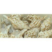 Раковина для аквариума Фусинос