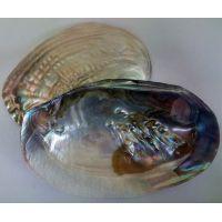 Раковина для аквариума Жемчужница