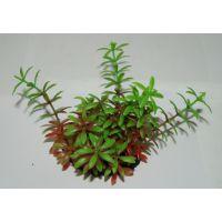 Пластиковое растение для аквариума 021071