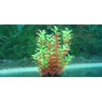 Пластиковое растение для аквариума 034251