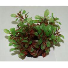 Пластиковое растение для аквариума 220081
