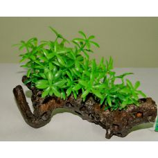 Пластиковое растение на коряге для аквариума 225112
