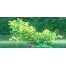 Пластиковое растение для аквариума 5020