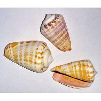 Раковина для аквариума Стромбус Лухуантус