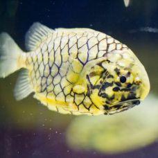 Рыба – бортовые огни