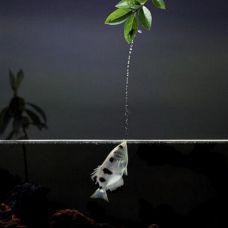 Рыба – брызгун