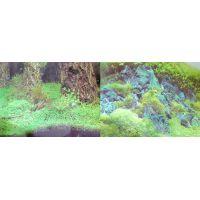 Задний фон для аквариума двухсторонний 40см высота 9086/9087