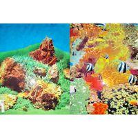 Задний фон для аквариума двухсторонний 50см высота A2/YH002