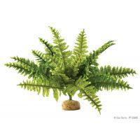 Декорация растение Boston Fern Medium Hagen Exo Terra PT2995