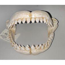 Челюсти акулы керамические А8111568