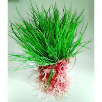 Пластиковое растение для аквариума 3125