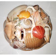 Набор натуральных больших океанических раковин в корзине 22см