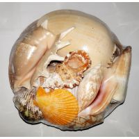 Набор натуральных океанических раковин в корзине средний 19см