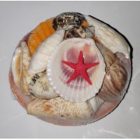 Набор натуральных океанических раковин с морской звездой 8см