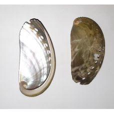Раковина для аквариума Галиотис Ассиния перламутровый 6см