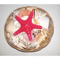 Набор натуральных океанических раковин с морской звездой 20см