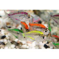 Рыбка Окунь стеклянный цветной GLO